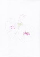 http://marshallrendina.com/files/gimgs/th-35_Flora5.jpg